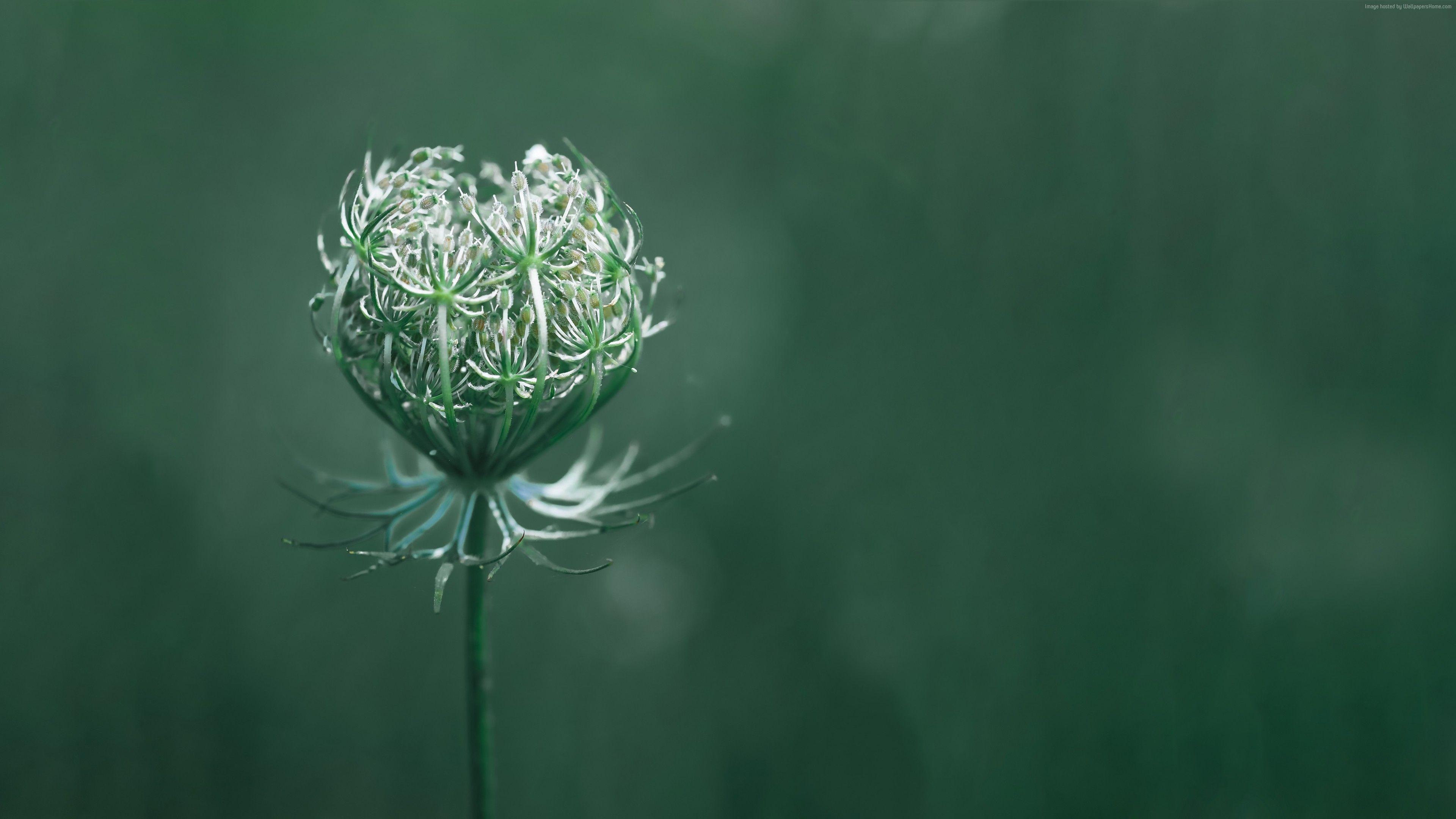 Wallpaper Flower Green Macro 10k Nature Https Www Pxwall Com