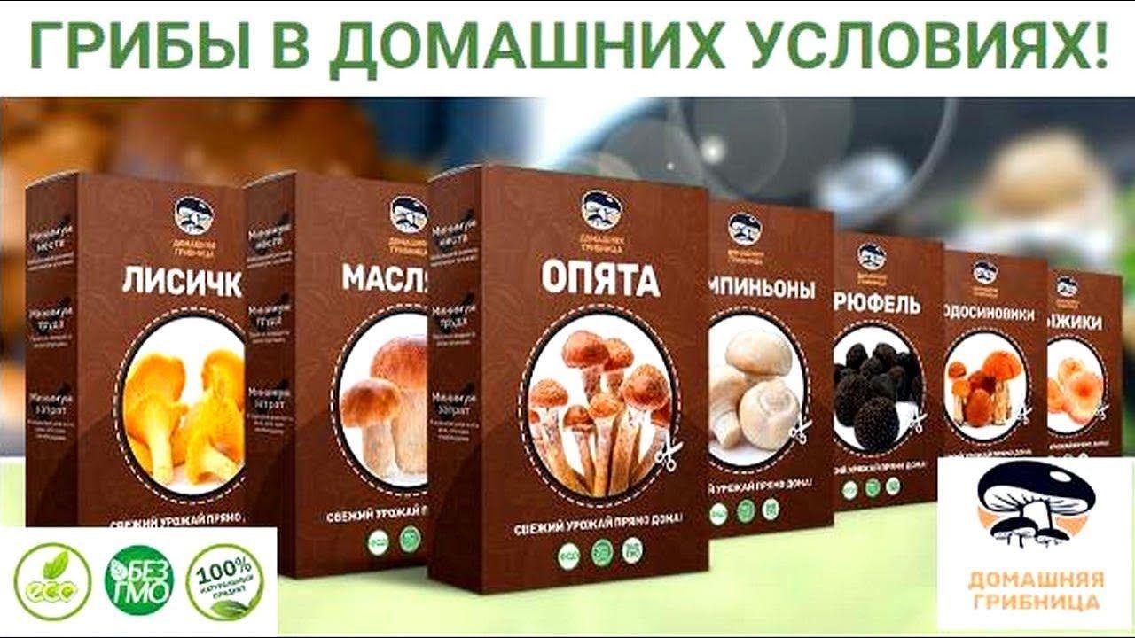 грибы в коробках для домашнего выращивания