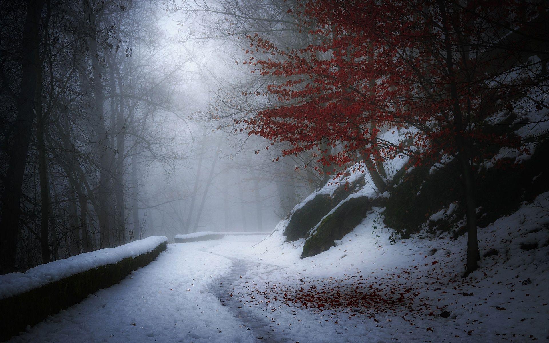Hd free wallpaper winter scene d wallpapers pinterest d