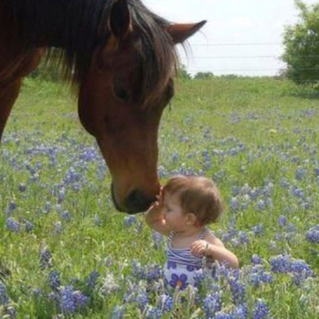"""<3...Horses/Ponies """"hey little buddy, it's time for us to go, come on""""...so adorable!"""
