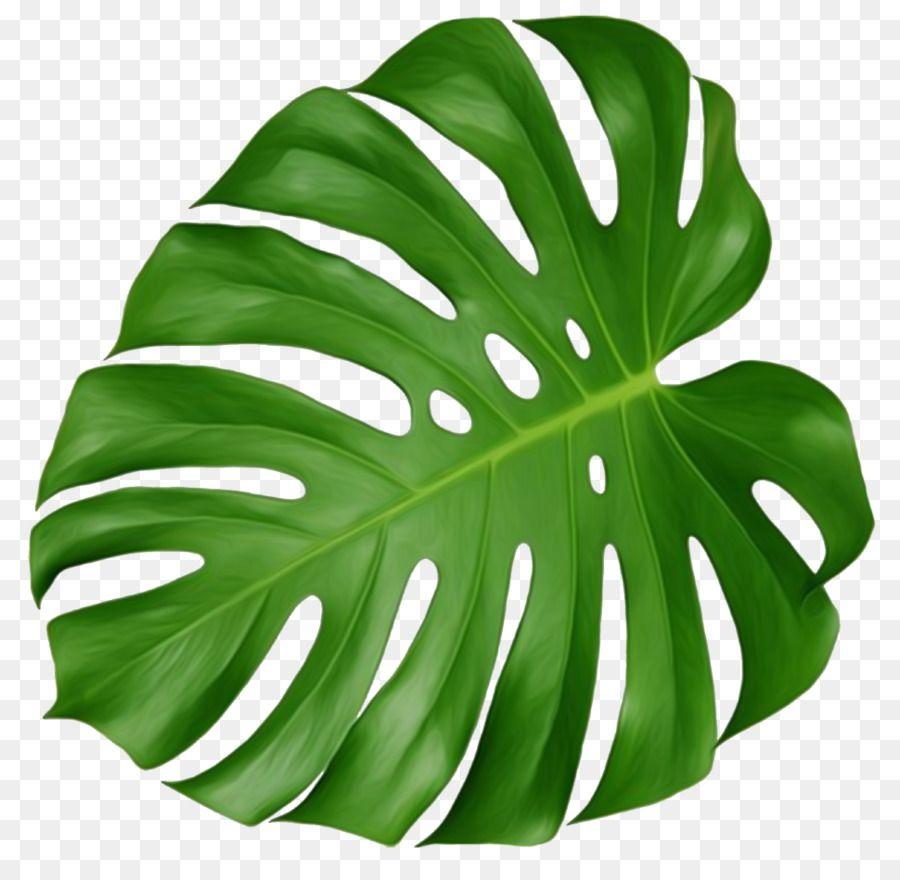 Download Leaf Swiss Cheese Plant Tropics Clip Art Tropical 940447 Png Bunga Tropis Lukisan Cat Air Tropis