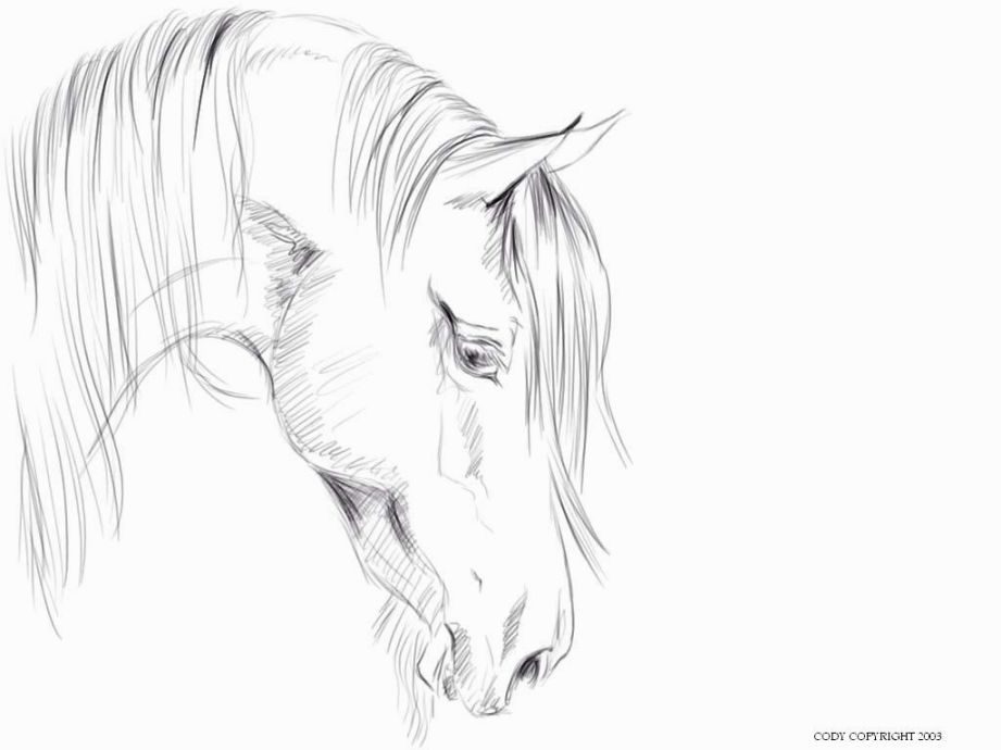 horse head coloring page # 45