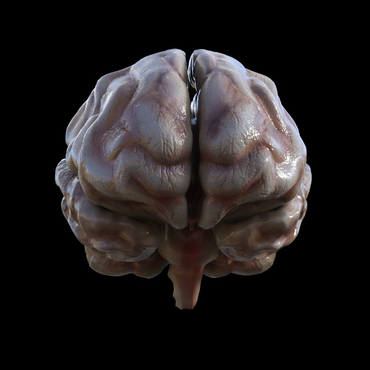 3dsmax human brain | Medical | Pinterest | 3d anatomy