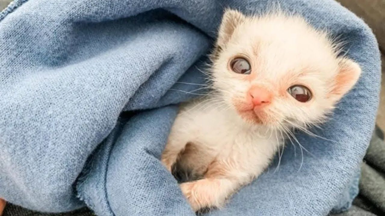 Smallest Kitten Ever Was Rejected By His Mom Now Grows Up To Be Gorgeous Youtube In 2020 Small Kittens Kitten Cat Lovers
