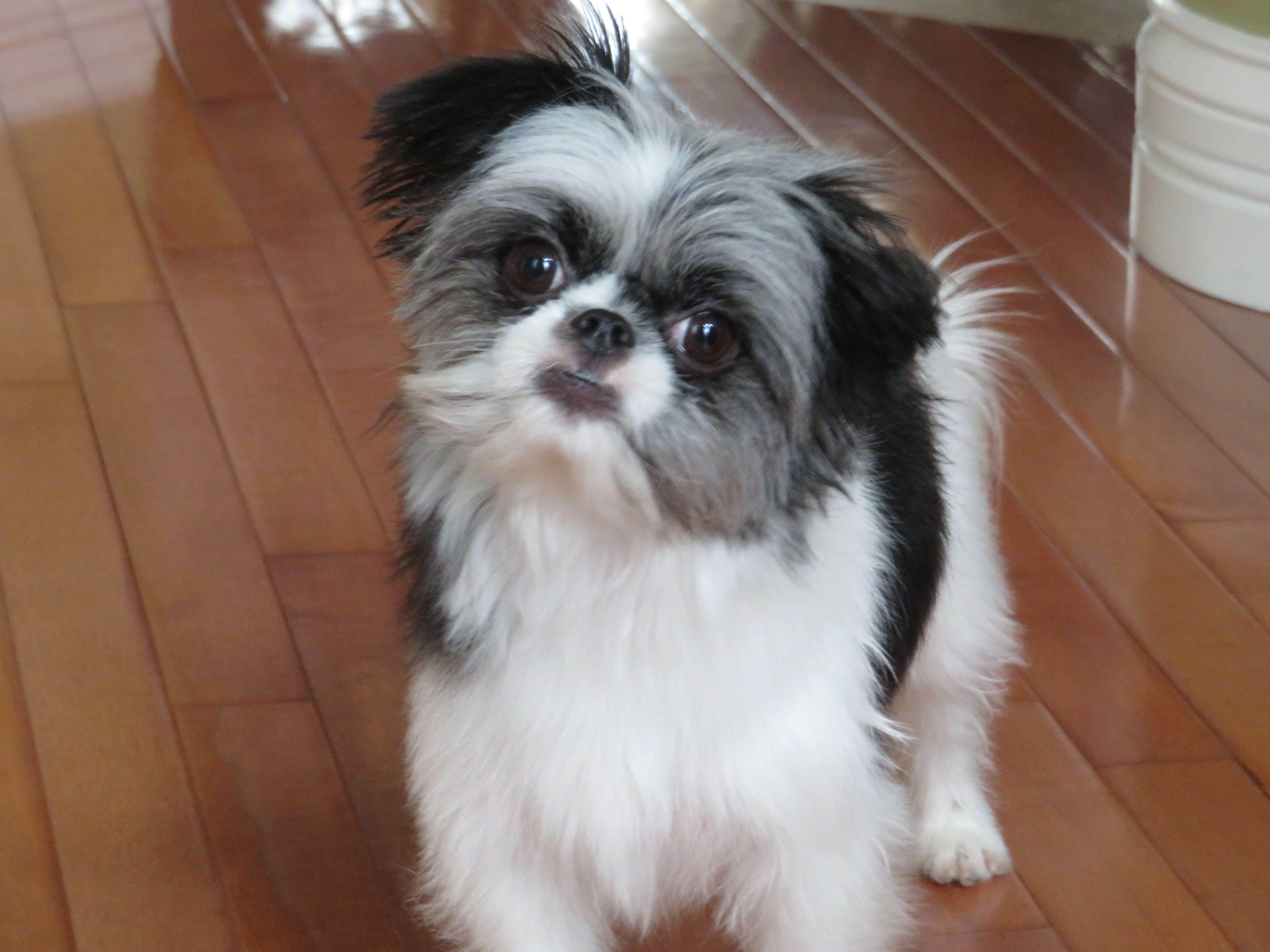 Adopt Ike On Petfinder Animal Shelter Dog Adoption Help Homeless Pets