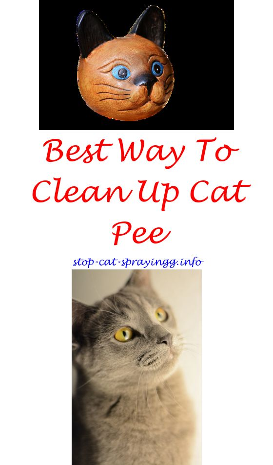 Incroyable Cat Urine Pictures Spray To Keep Cats Off Outdoor Furniture   Male Cat  Spraying Odor Removal.cat Urine Kitty Amazonlice Spray Cats J Cat Spray Set  U2026