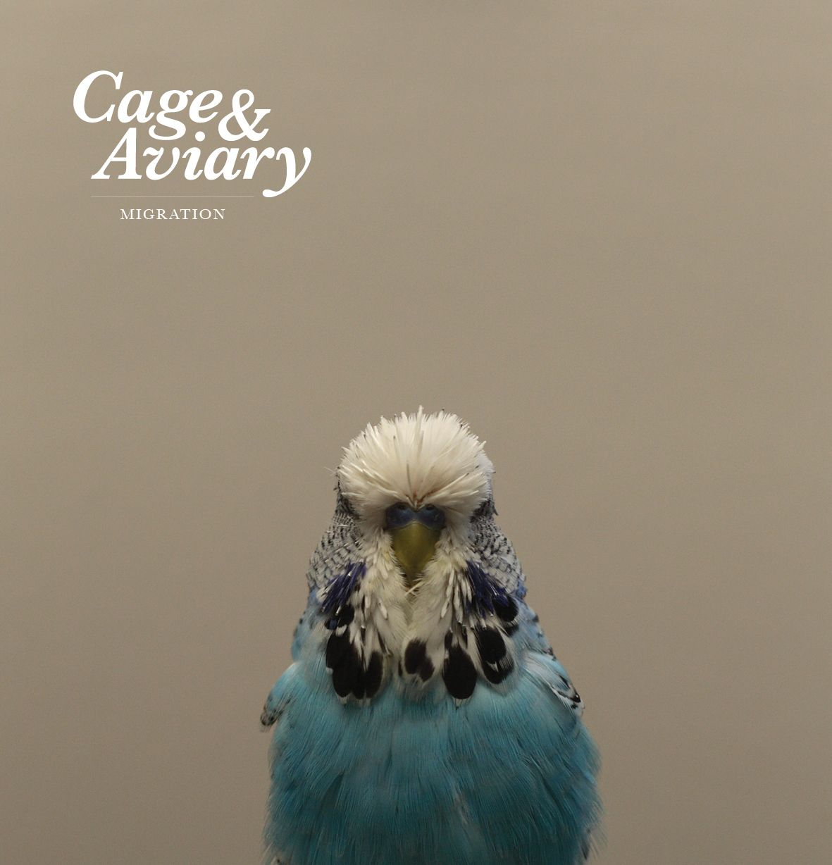 Cage & Aviary Migration Album Review Budgies, Cute