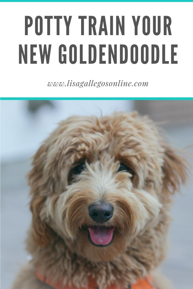 What To Do The First Few Days With A New Puppy 2021