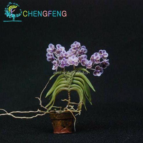 2016 Hot Sales! 100pcs Seeds Mini Bonsai Orchid Seeds Indoor Home Miniature Flower Pot Garden Plants Four Seasons Free Shipping
