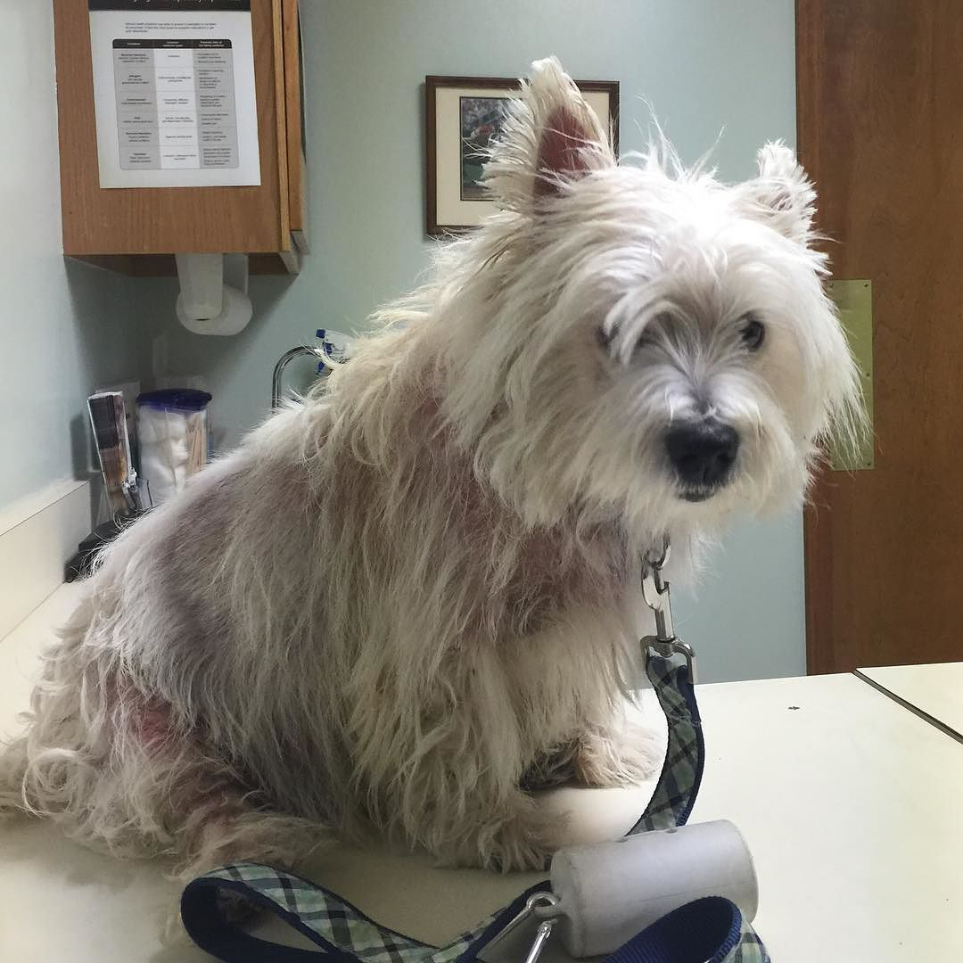 Rupp is back at the vet for a skin check. A ways to go but