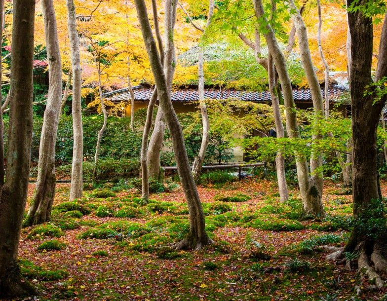 Japanesegardens_featured2-392x305