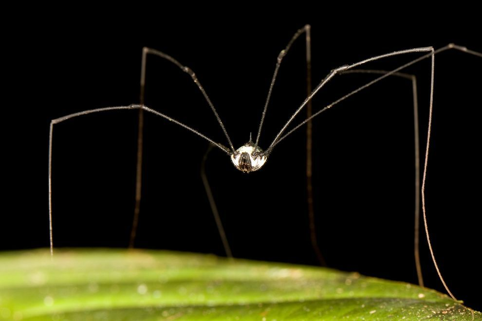 5 facts about daddy longlegs that will surprise you