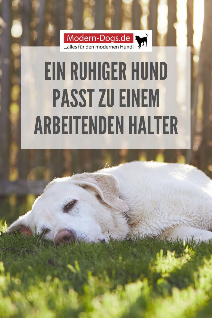 Pin auf Anschaffung von Hunden   Hundekauf