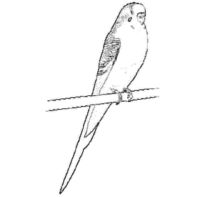 Parakeet Coloring Page  wall art the easy way  Pinterest