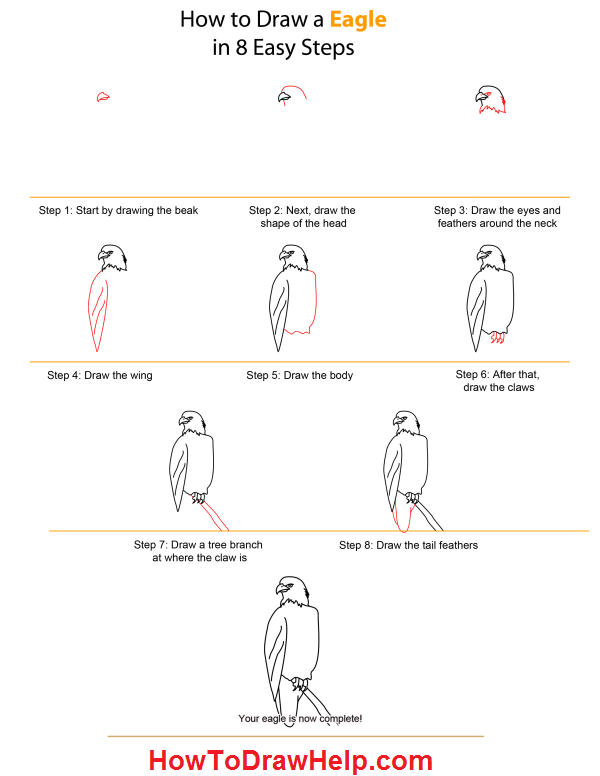 How to draw an eagle lots of drawing tutorials at www howtodrawhelp com