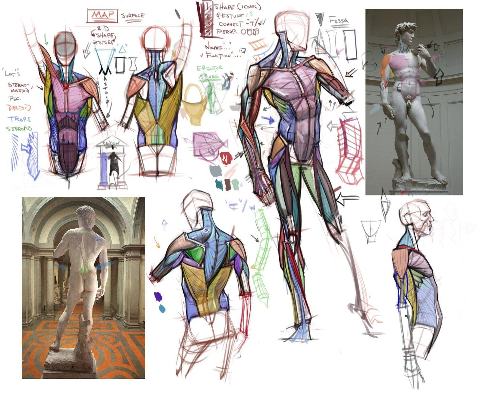 Figuredrawingfonews Anatomy Lecture Breaking Down David