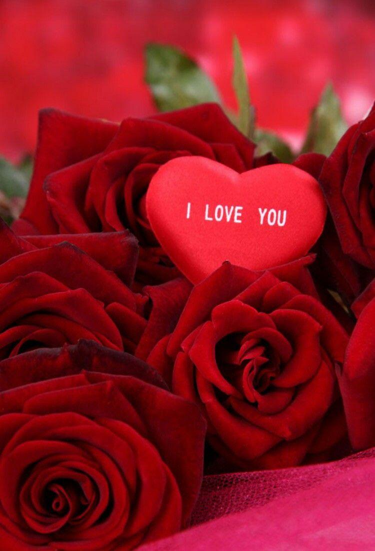 Love romantic heart rose wallpaper hd
