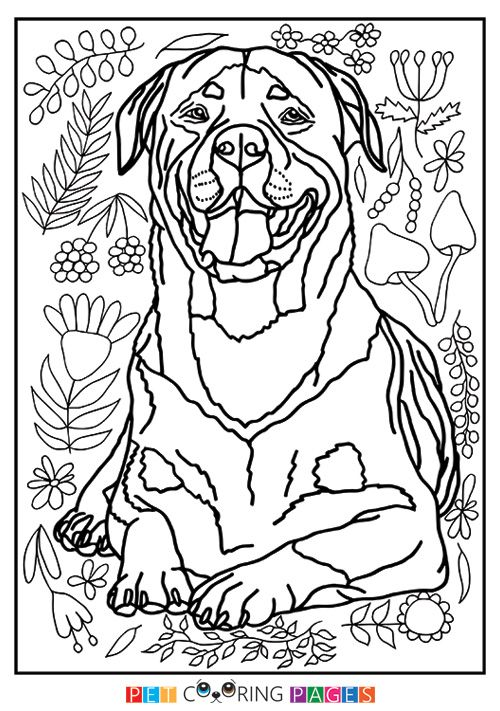 Rottweiler Coloring Page Dog Animal Coloring Pages Rottweiler