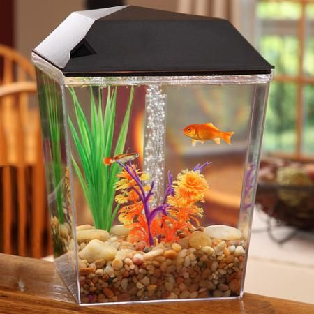 Aqua Culture 1-Gallon Aquarium Tank Starter Kit {Walmart
