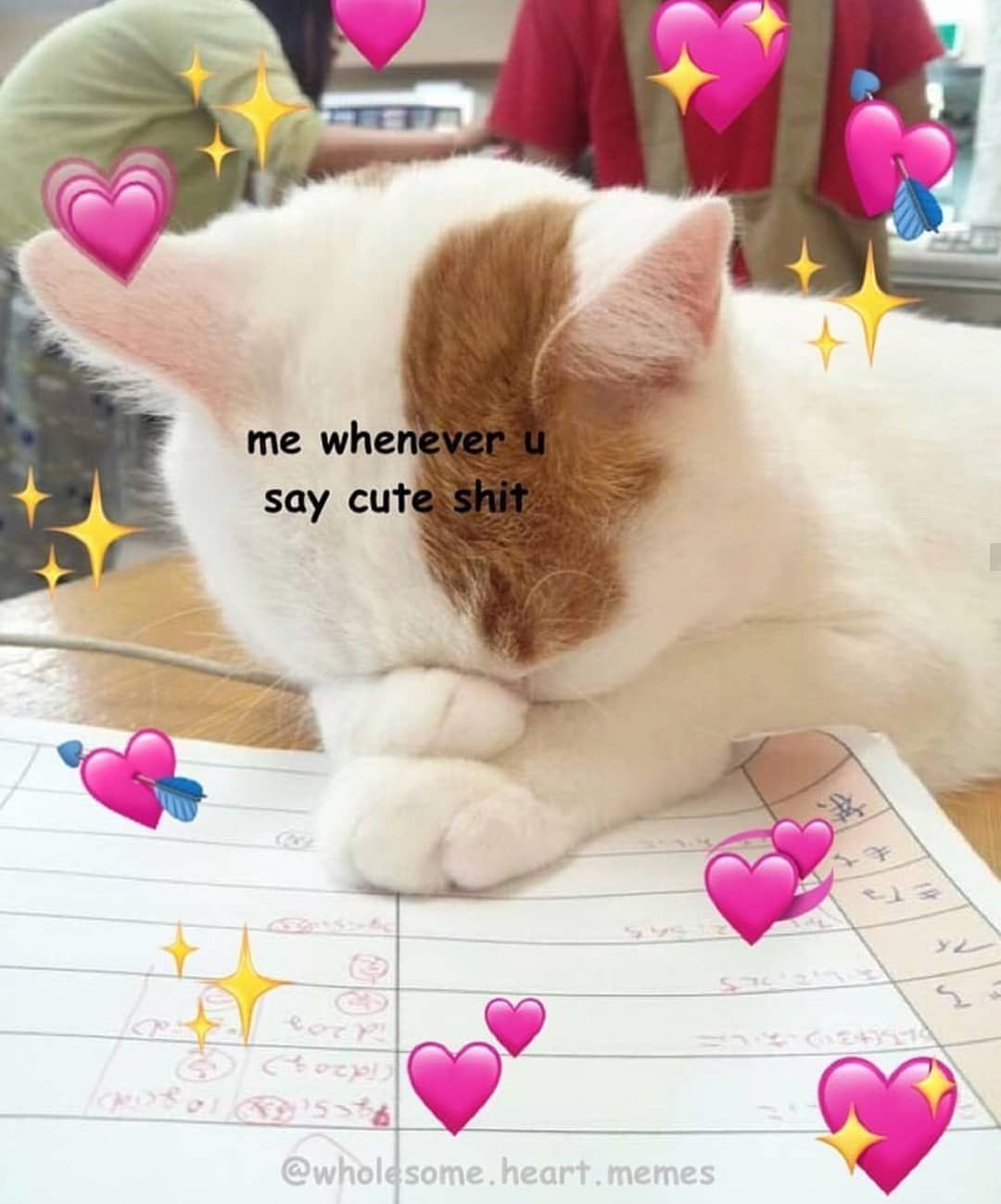 Cat Hearts Meme : hearts, Someone, Special, #wholesome, #wholesomememe, Hearts, #love, #meme, #softmeme, #cute, #cutememe, #p…, Meme,, Memes,, Memes