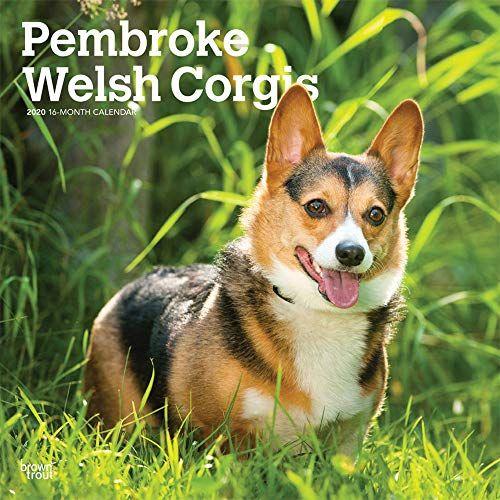 Telecharger Pembroke Welsh Corgis 2020 Calendar Pdf Par Inc Browntrout Publishers Telecharger Votre Fichier Ebook Ma Corgi Corgi Breeds Pembroke Welsh Corgi