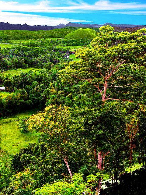 보홀의 열대림