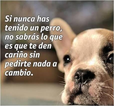 Imagenes Con Mensajes Sobre Los Perros Perros Frases
