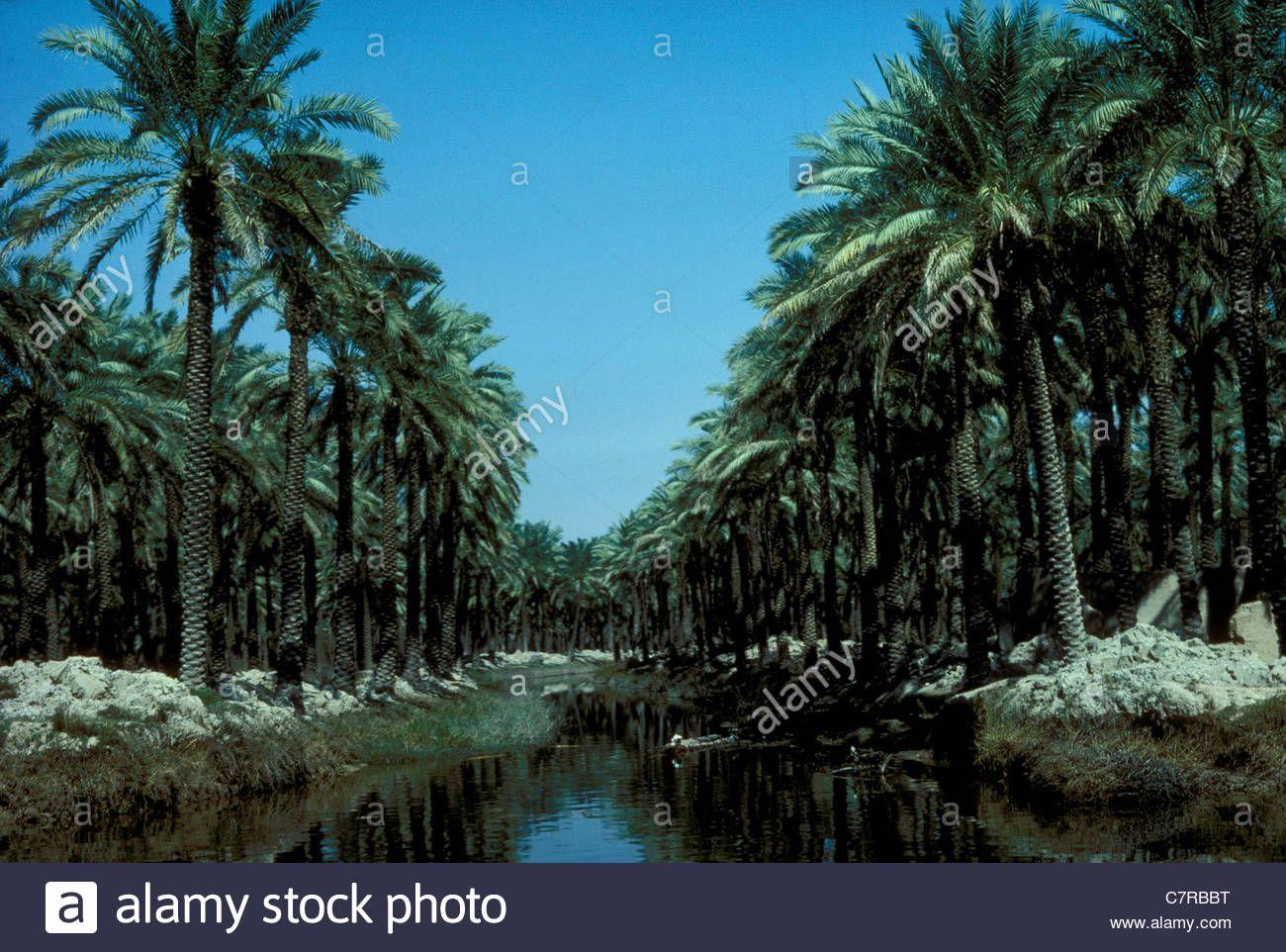 Basra dating