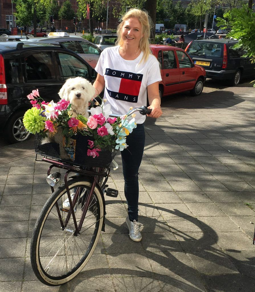 Dog In Bicycle Basket In Amsterdam Dog Advice What To Do If Your Dog Is A Fussy Eater Won T Eat P Dog Training Near Me Dog Boarding Near Me Biking