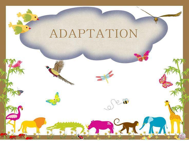 Adaptation Graphic Organizer Hibernation, Migration
