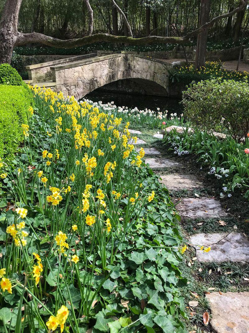 Inspiring Garden Design A Daffodil Landscape In Dallas Private Newport Garden Design Daffodil Gardening Daffodils