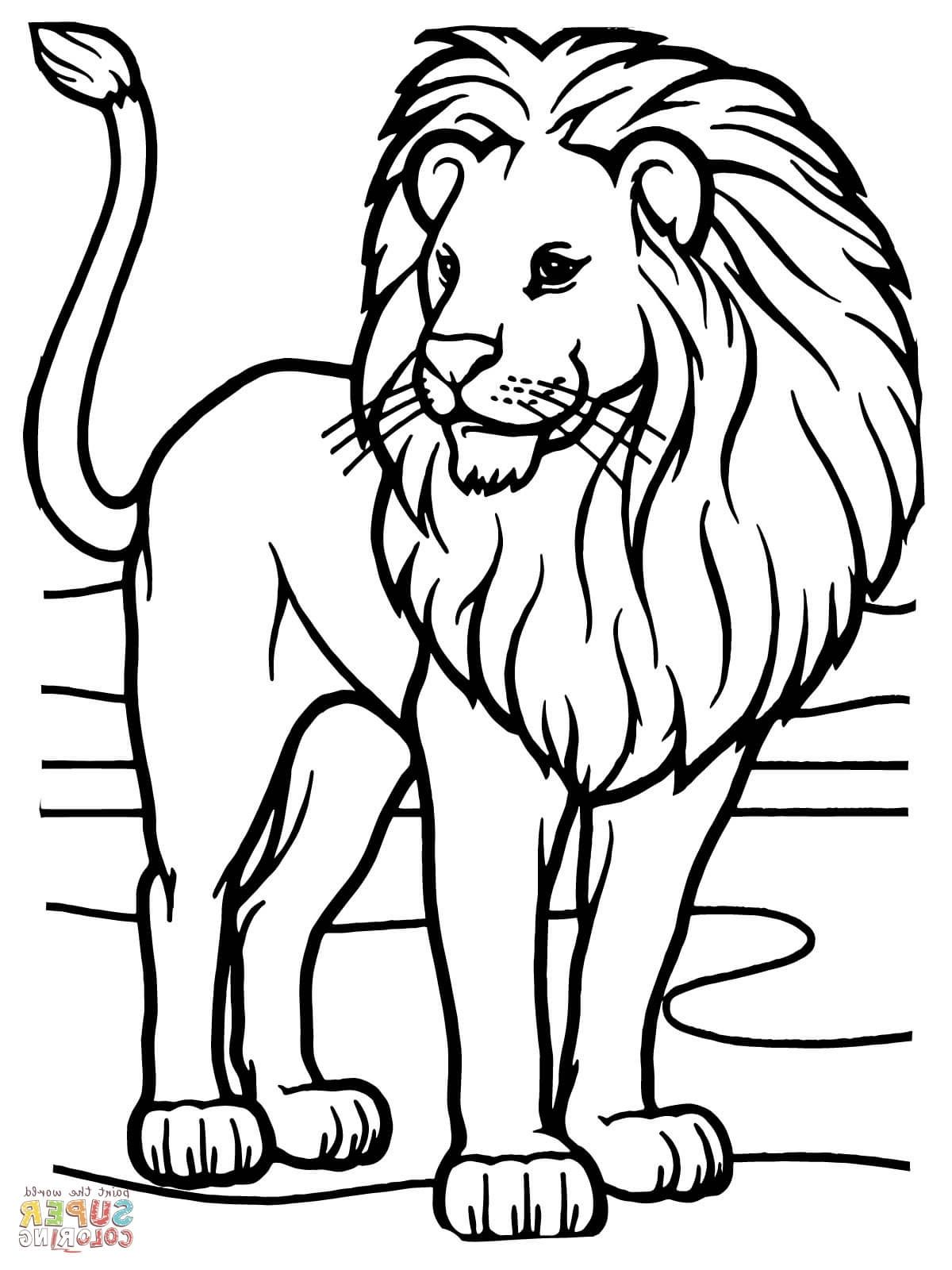 Coloring Page Lion Lion Coloring Pages Lion Coloring Page Lion Coloring
