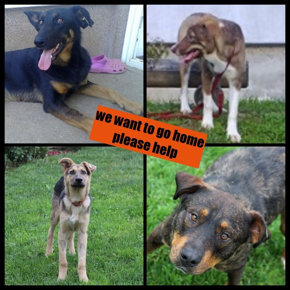Ary Boo Russet Jo And Gara By Brigitta Veen Gofundme Ary Russet Little Jo Gara And Boo Travel From Bosnia To The Netherlan Go Fund Me Foster Home Boo