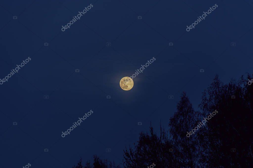 Scenic View Full Moon Forest - Stock Photo , #Sponsored, #Full, #View, #Scenic, #Moon #AD