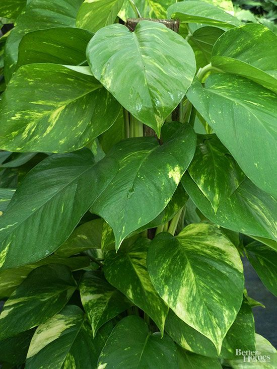 Fleur · plantes dintérieur pour faible luminosité