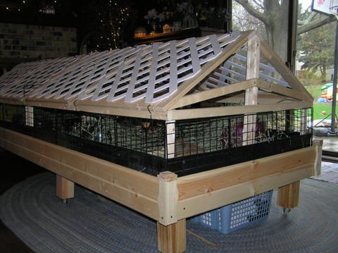Lattice fence panels as roof framing for an outdoor pen for Outdoor guinea pig cage