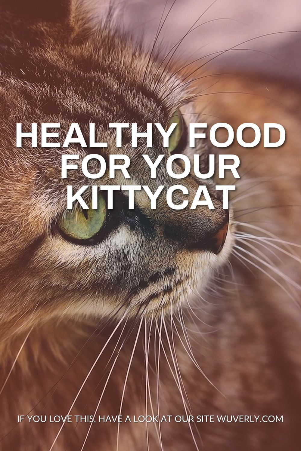 Healthy Food For Your Kittycat In 2020 Feline Health Healthy Digestive System Nutritious Meals