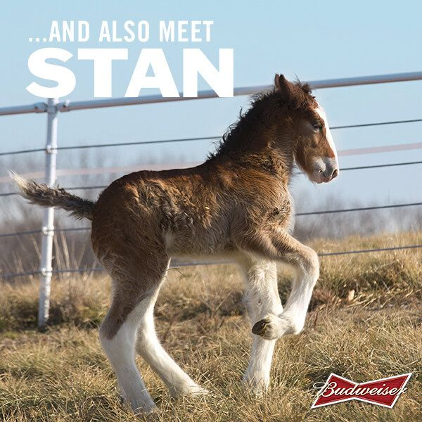 Stan the Clydesdale has a nice ring to it.