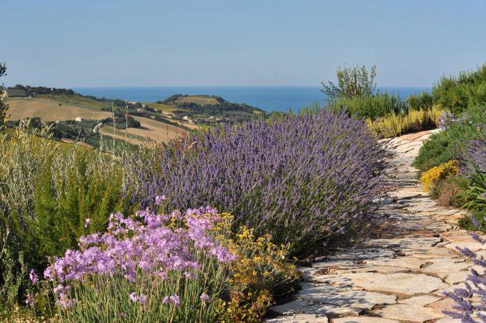 Fiori Bianchi Macchia Mediterranea.Macchia Mediterranea Giardino Mediterraneo Giardino Gazebo Da