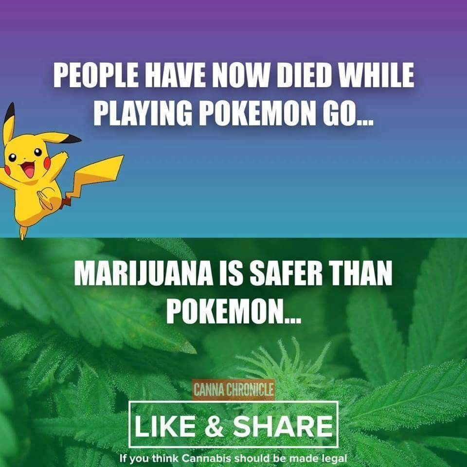 Sent this to my poke-go obsessed, anti pot cousin. She was not impressed.missswood - http://asianpin.com/sent-this-to-my-poke-go-obsessed-anti-pot-cousin-she-was-not-impressed-missswood/