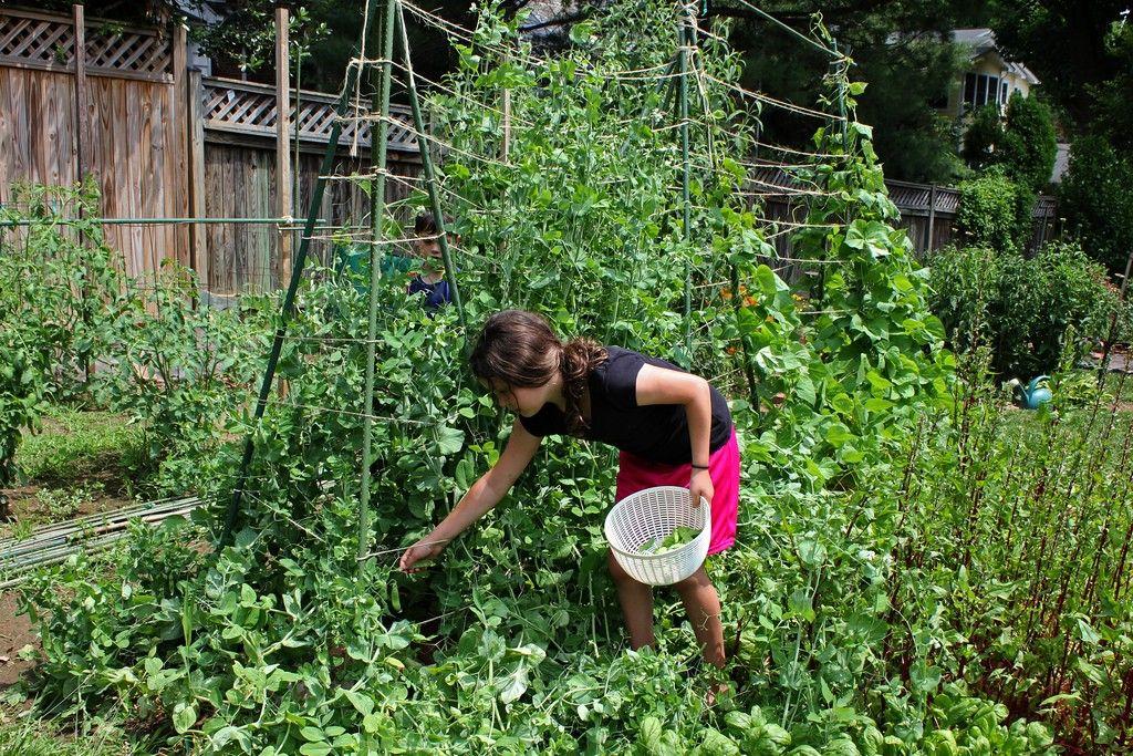 Children\'s Garden Ideas - Teaching Kids To Design A Garden   Gardens ...