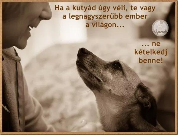 kutyaszeretet idézetek Kutyás idézetek – KutyaSzeretet.hu in 2020   Dogs and puppies