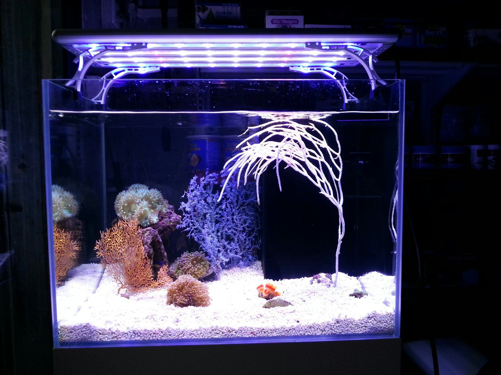 diy quality is dsc impossible lights almost pictures everywhere them for take it me light temporary system picture full aquaponics reflections and indoor aquarium the all excuse to due running of on tank