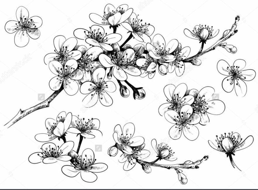 11 Gambar Bunga Matahari Hitam Putih Untuk Kolase Foto Pemandangan Hd Sketsa Bunga Gambar Bunga Lukisan Bunga