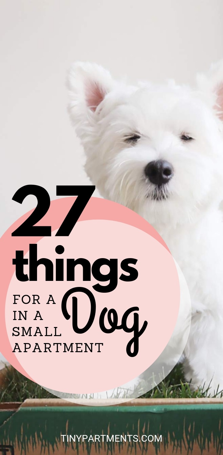 27 Things That Make Having A Dog In A Small Apartment A Walk In The Park Tiny Partments In 2020 Small Apartment Dogs Best Apartment Dogs Apartment Dogs