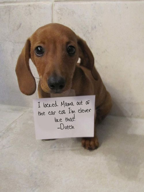My Dog Locked Me Out My Car This Morning Dog Shaming Weenie