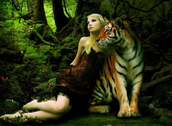 beauty and the tiger