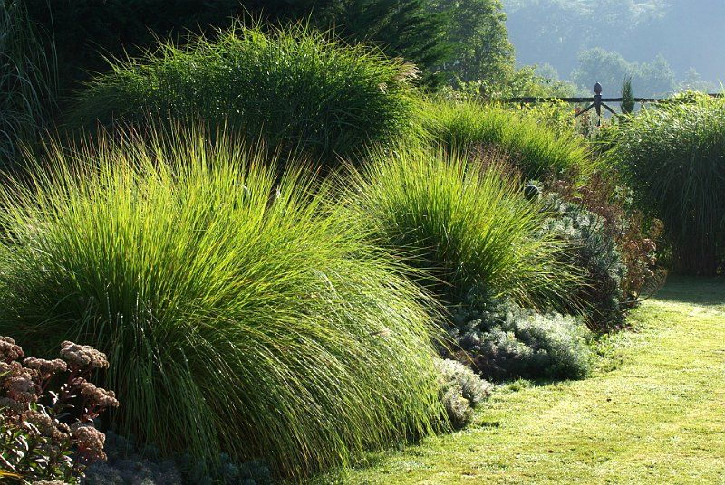 Graminees au jardin contemporain jardin pinterest for Massif contemporain jardin