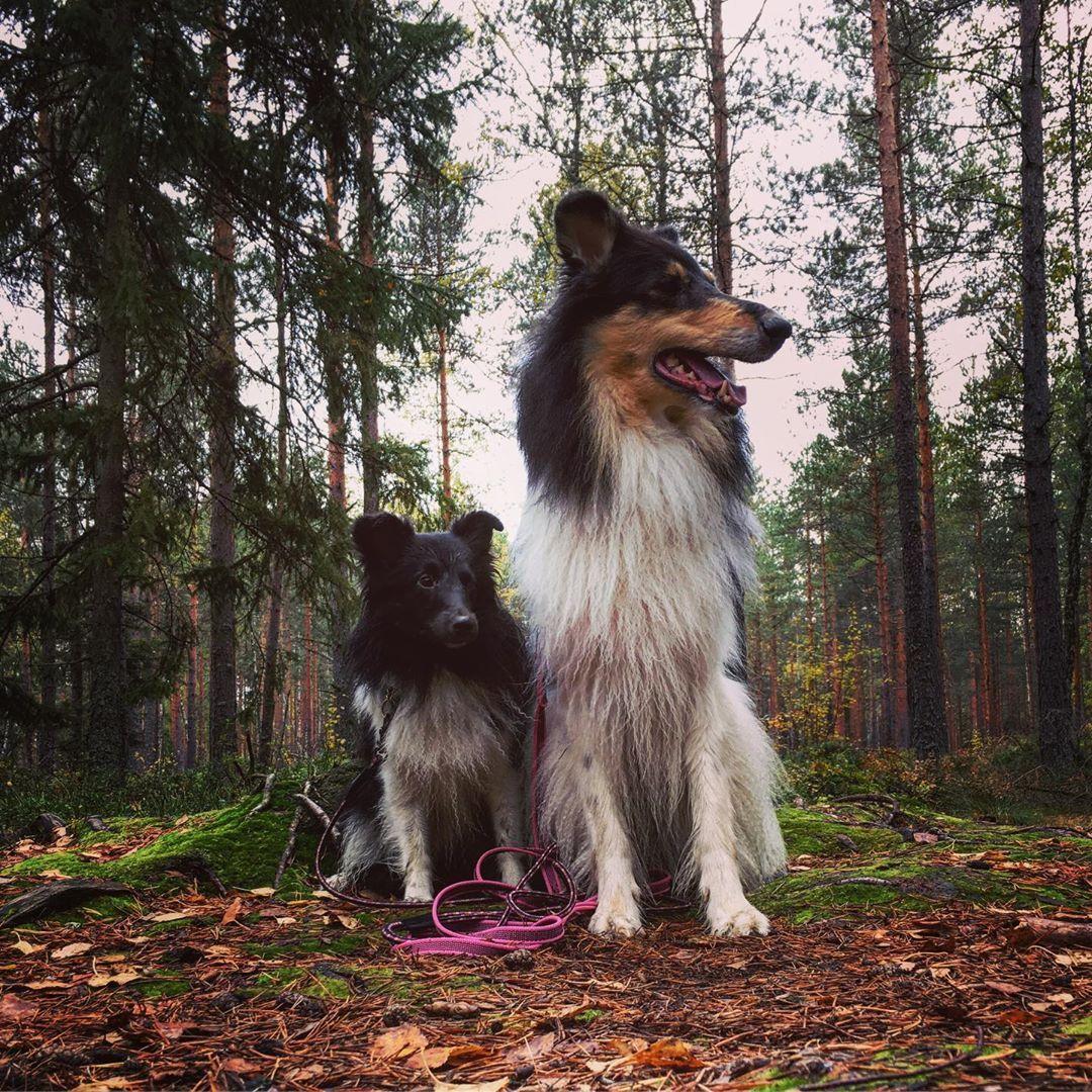 Symptoms And Treating Food Allergies In Dogs Team Karva Ei