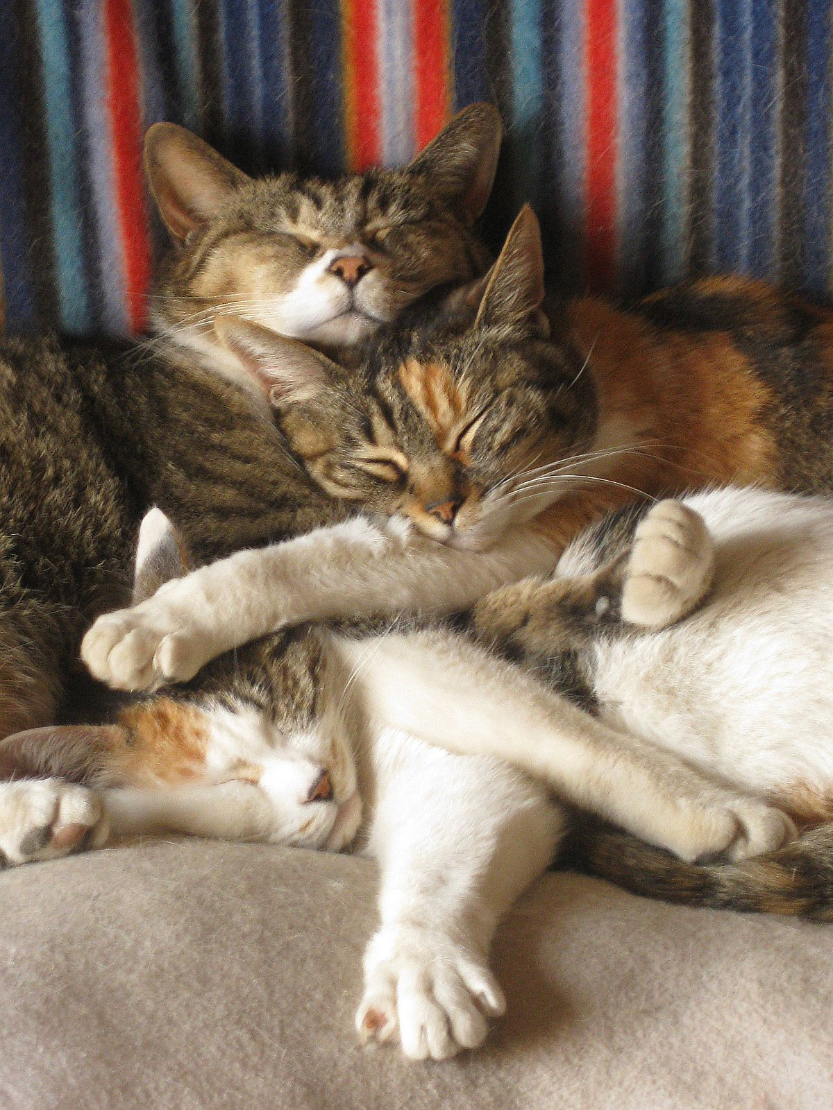 Mostlycatsmostly Via Kabegami Com Cat Sleeping Silly Cats Happy Animals